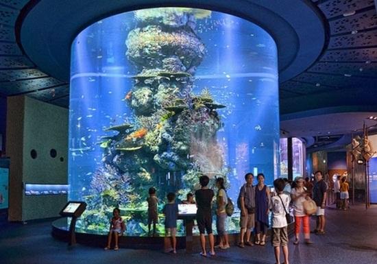Mua vé sea aquarium - Thủy cung sea aquarium ở singapore
