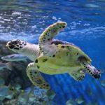Giá vé sea aquarium singapore - Thủy cung lớn nhất thế giới
